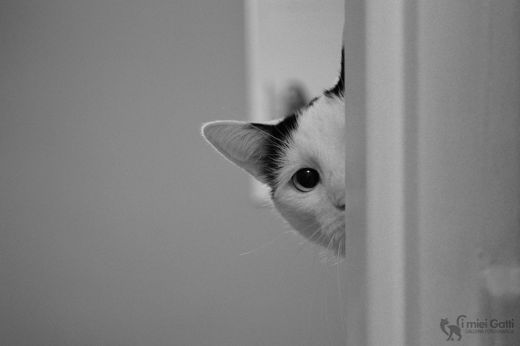 gatto dietro l'angolo
