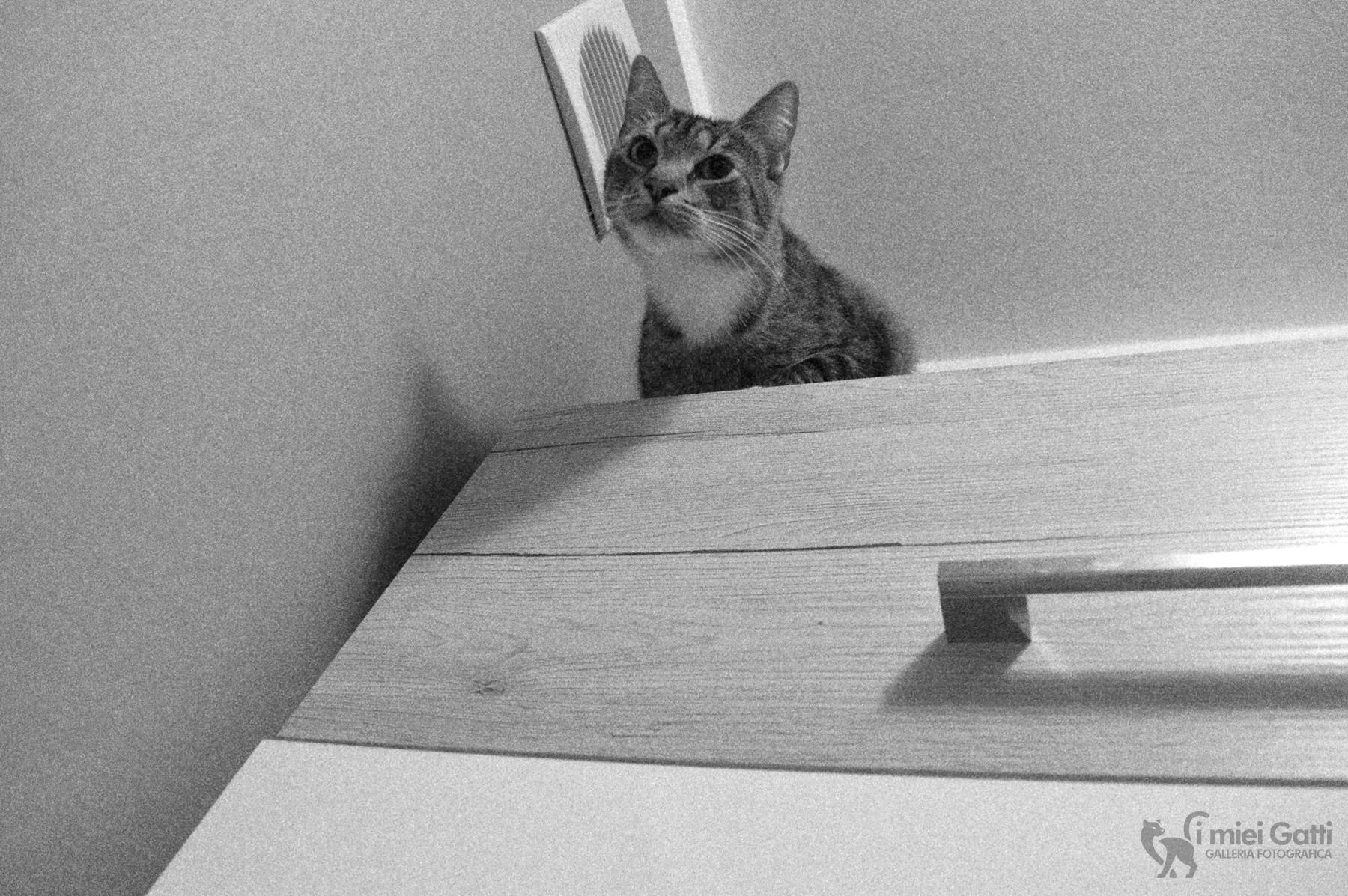 gatto prima di saltare