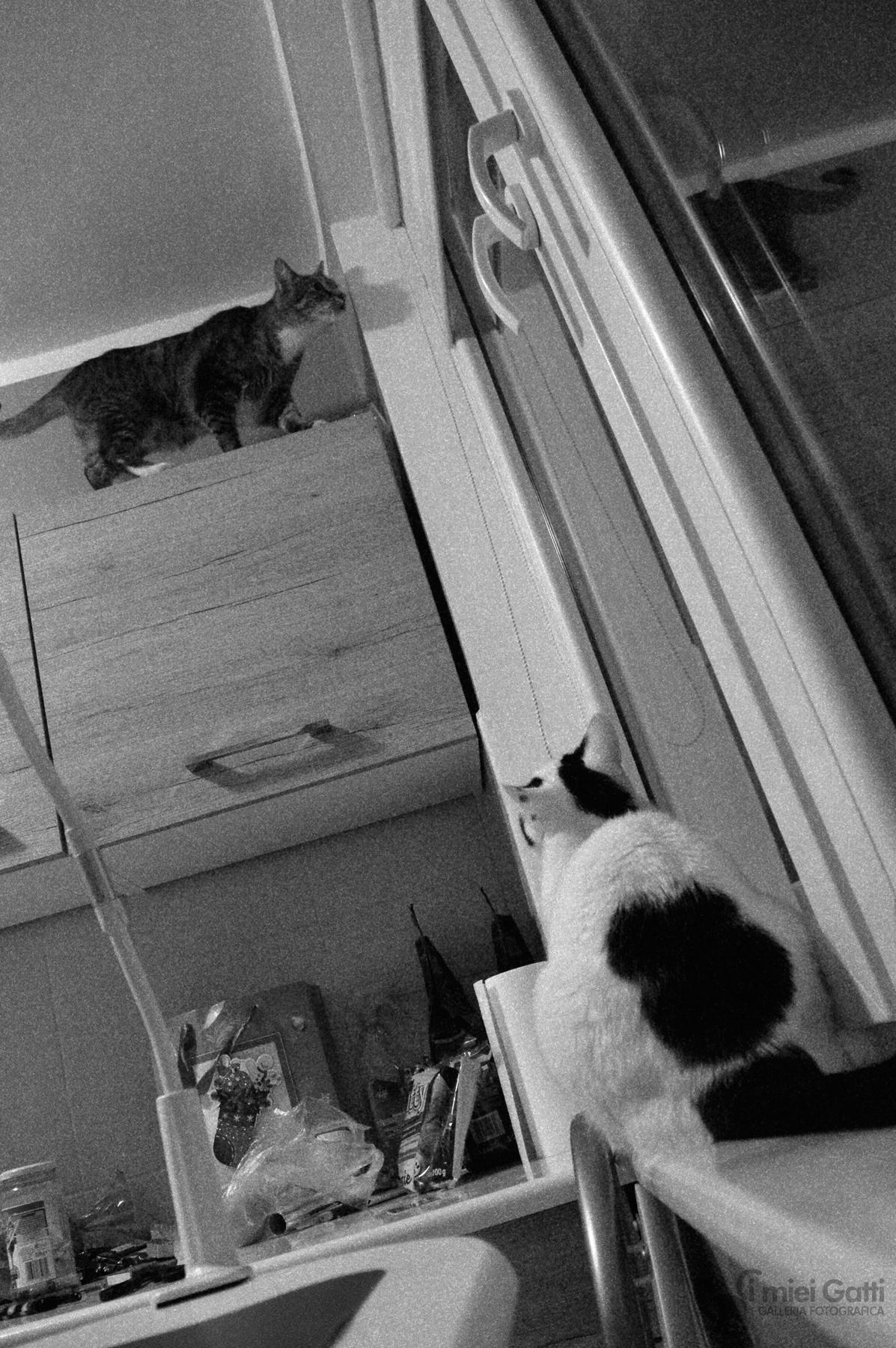 cosa stai facendo lì?