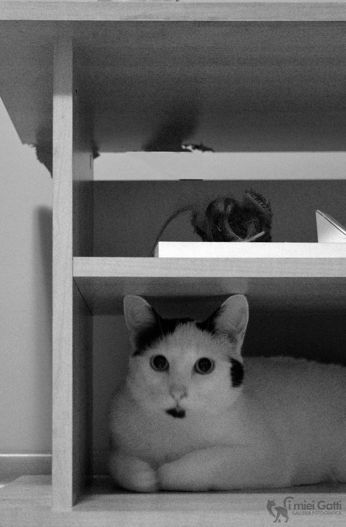 nascosto