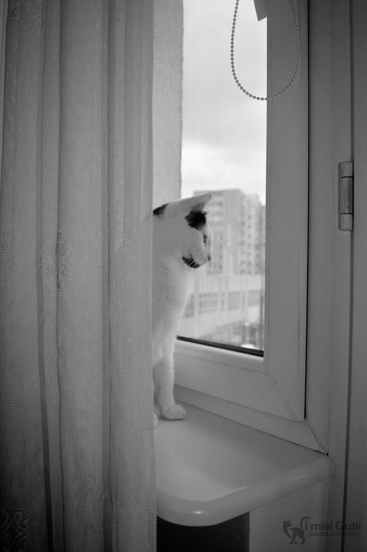 attraverso la finestra