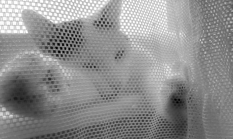 gatto dietro la tenda