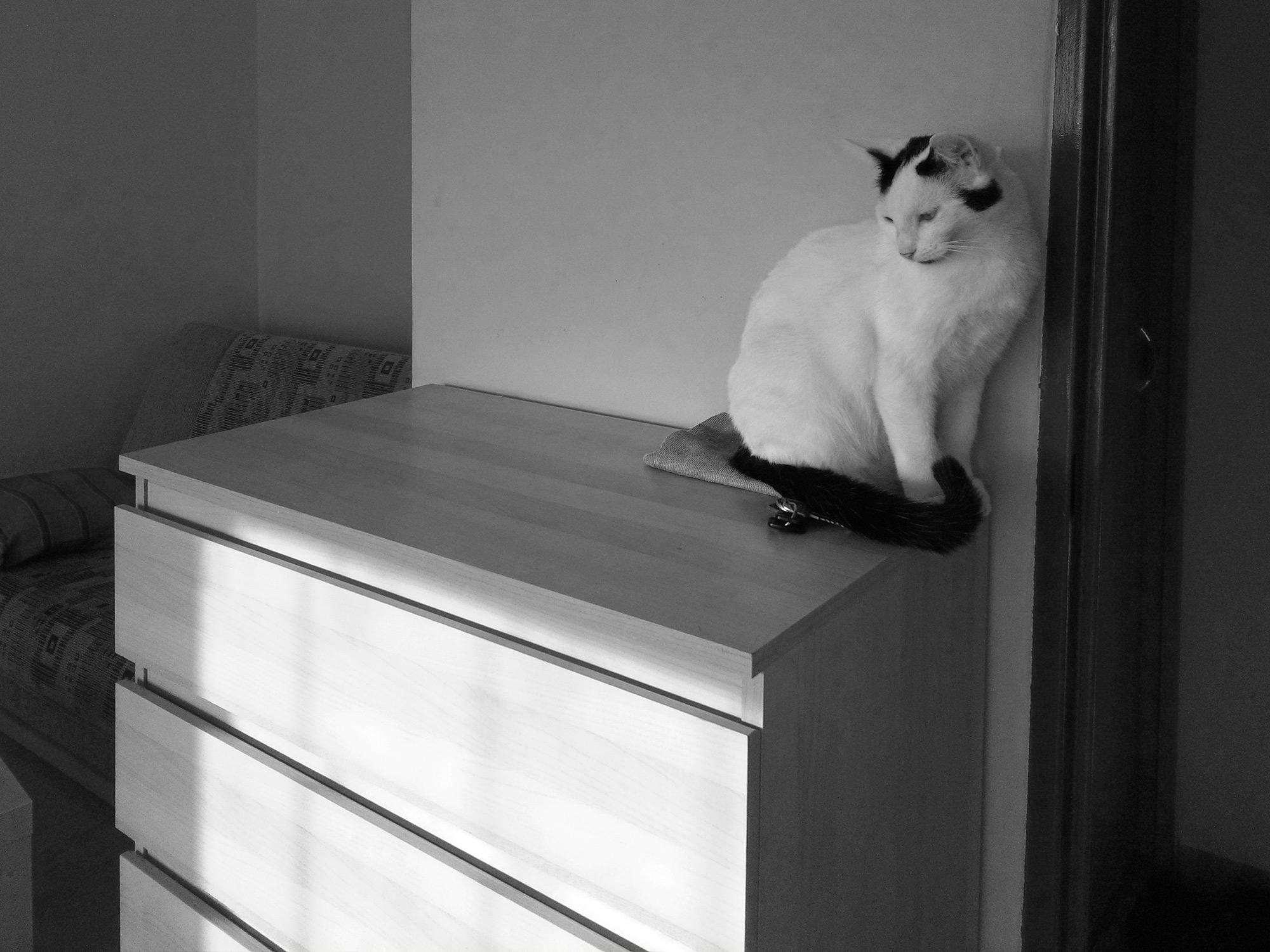 il gatto è seduto e pensa