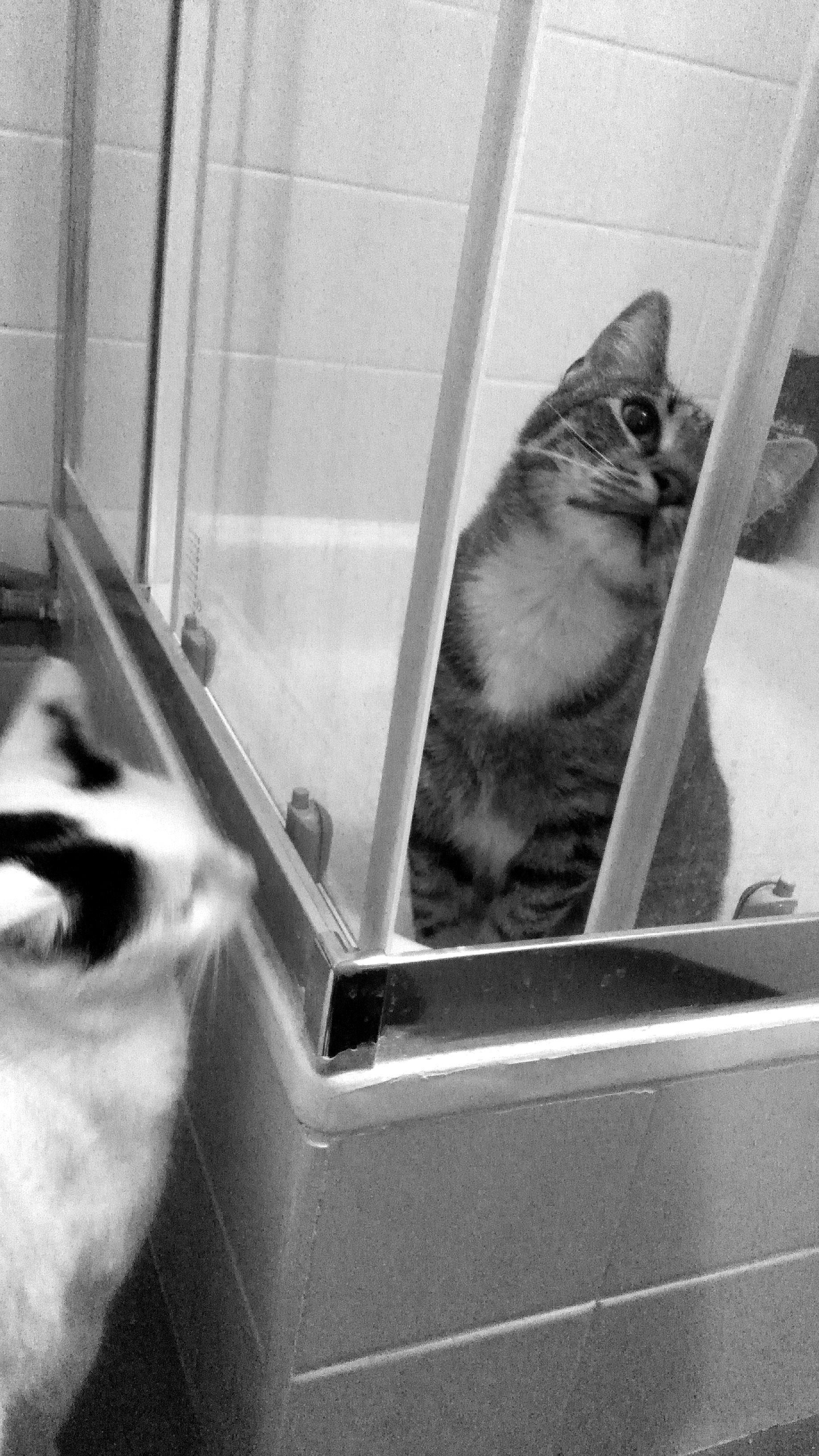 gatti sotto la doccia