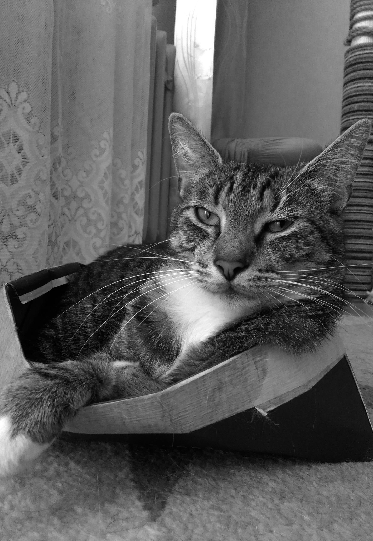 pensatore di gatto
